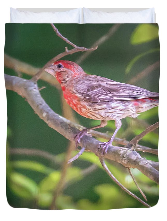 Cardinal Duvet Cover featuring the photograph Cardinal Bird In The Wild In South Carolina by Alex Grichenko