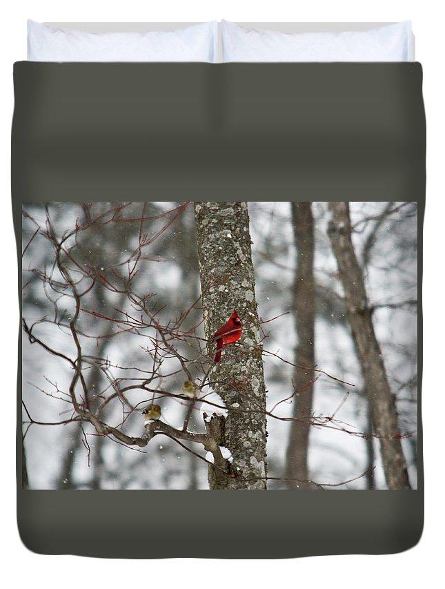 Cardinal Duvet Cover featuring the photograph Cardinal In Snow Storm by Douglas Barnett
