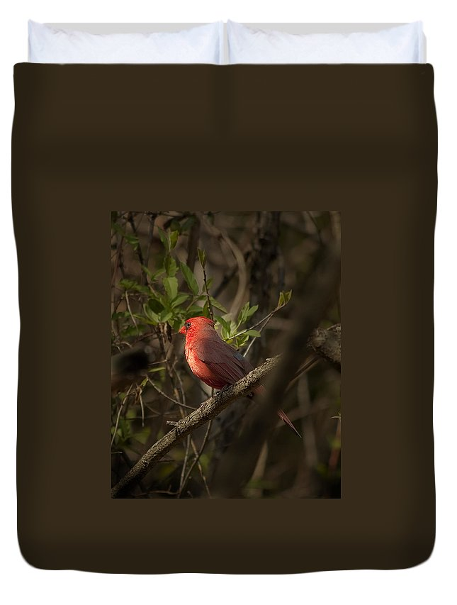 Backyard Duvet Cover featuring the photograph Cardinal In The Spotlight by Gary Adkins