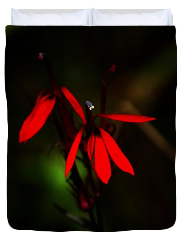 Digital Photograph Duvet Cover featuring the photograph Cardinal Plant by David Lane