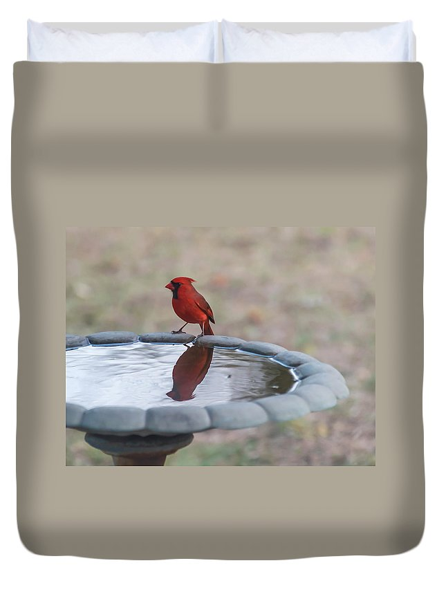 Terry Deluco Duvet Cover featuring the photograph Cardinal Reflection by Terry DeLuco