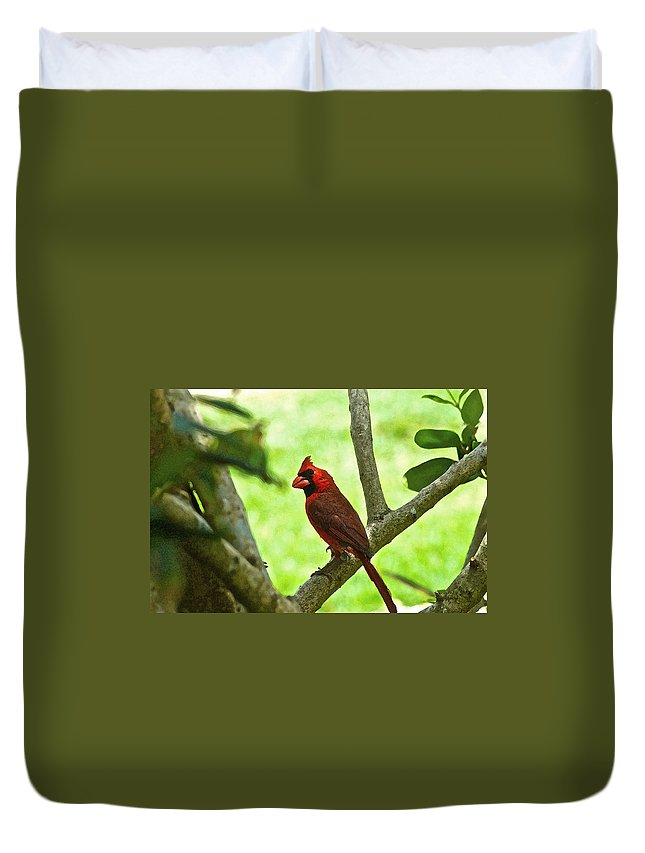 Animals Duvet Cover featuring the digital art Cardinal Render by Dale Chapel