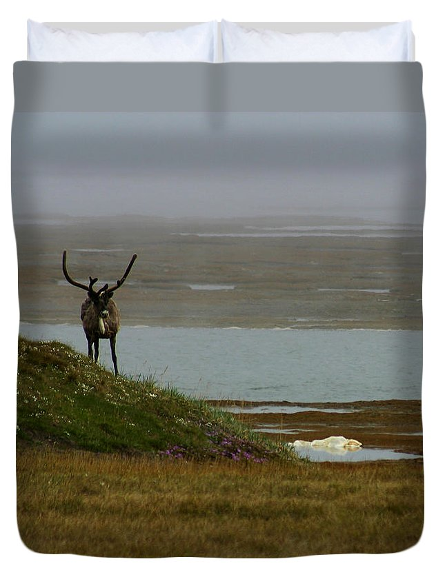 Caribou Duvet Cover featuring the photograph Caribou Fog by Anthony Jones