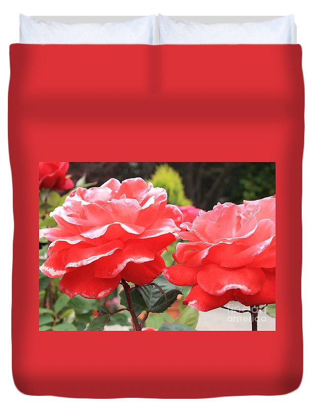 Carmel Mission Duvet Cover featuring the photograph Carmel Mission Roses by Carol Groenen