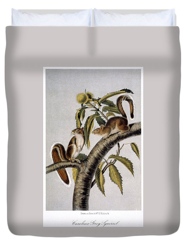 1846 Duvet Cover featuring the photograph Carolina Grey Squirrel by Granger