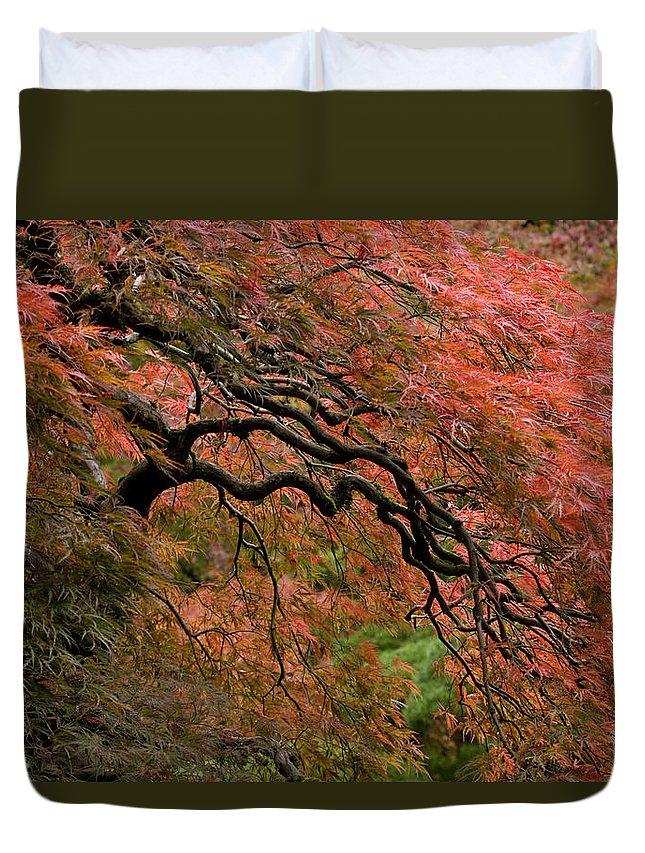 Cascading Japanese Maple Duvet Cover featuring the photograph Cascading Japanese Maple by Wes and Dotty Weber