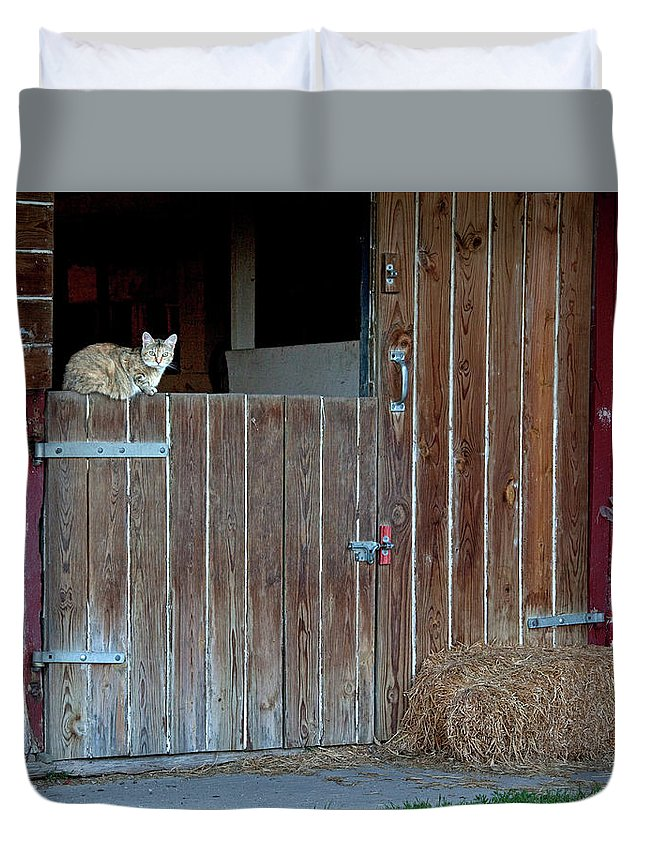 Cats Duvet Cover featuring the photograph Cat And Barn by George Sanquist