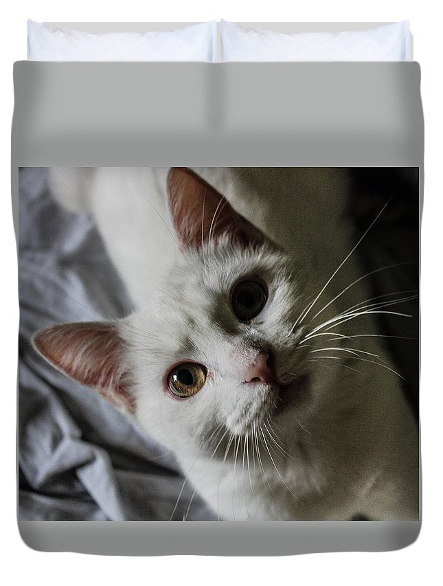 Cat Duvet Cover featuring the photograph Cat by Fae Scalmazzi