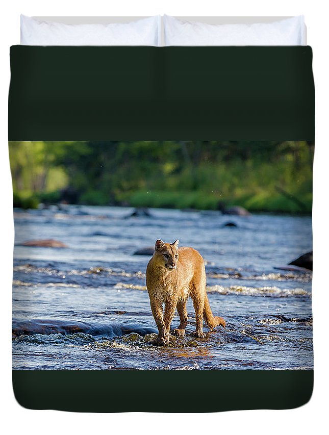 Cougar Duvet Cover featuring the photograph Cat On The River by Steven Szabo