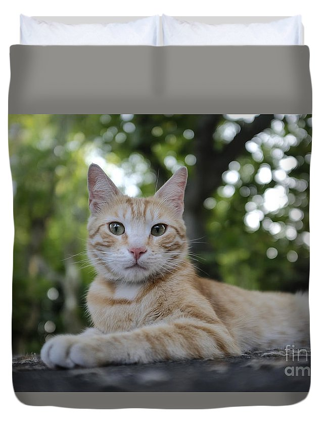 Italy Duvet Cover featuring the photograph Cat Volterra Italy by Edward Fielding