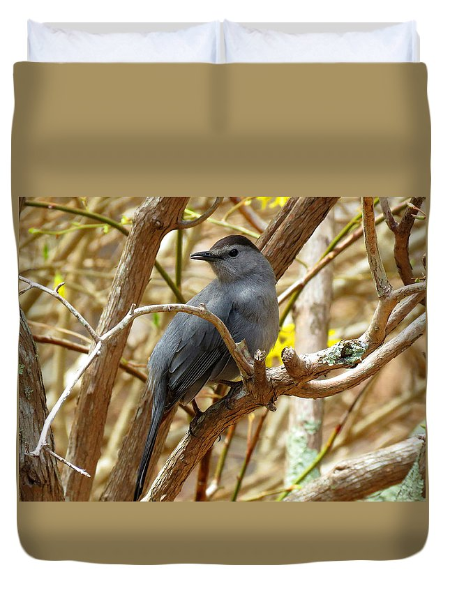 Catbird Duvet Cover featuring the photograph Catbird In Spring by Dianne Cowen