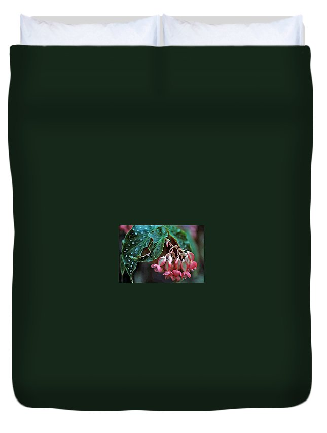 Cat's Paw Begonia Duvet Cover featuring the photograph Cat's Paw Begonia by Laurie Paci
