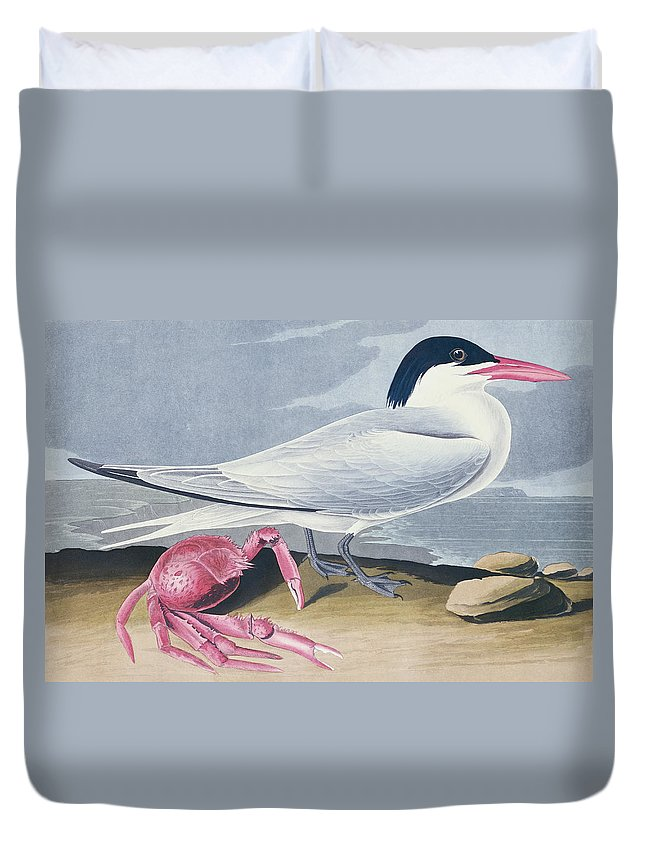 Tern Duvet Cover featuring the painting Cayenne Tern by John James Audubon