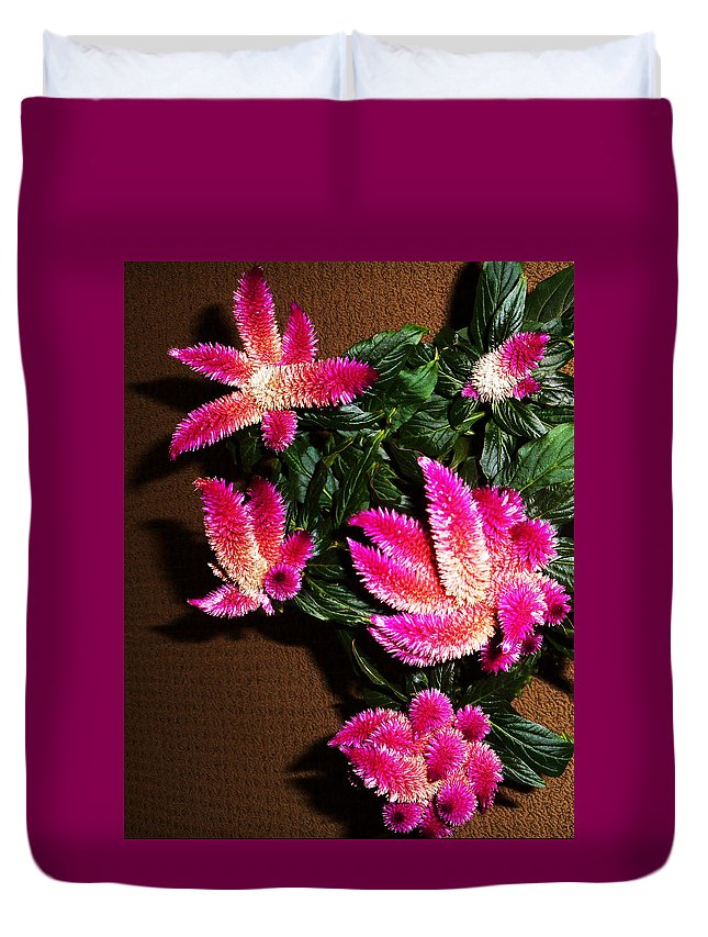 Celosias Duvet Cover featuring the photograph Celosia 7 by Ron Kandt