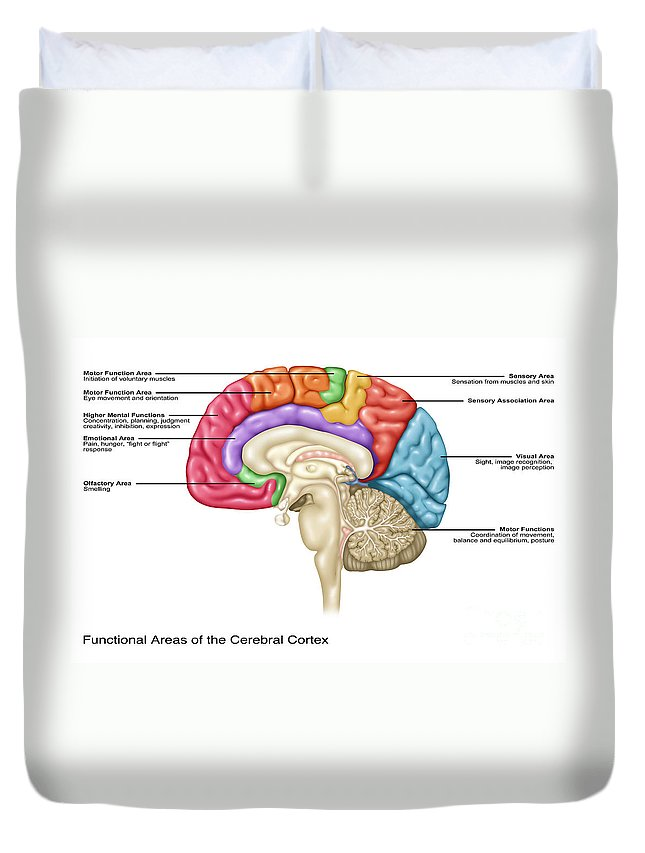 Cerebral Cortex Areas Illustration Duvet Cover For Sale By Gwen Shockey