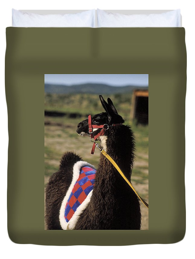 Llama Duvet Cover featuring the photograph Chaco by Jerry McElroy
