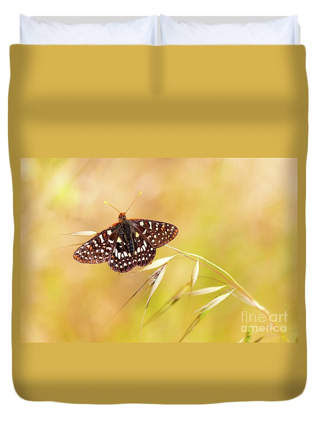 Close-up Duvet Cover featuring the photograph Chalcedon Butterfly by Mimi Ditchie