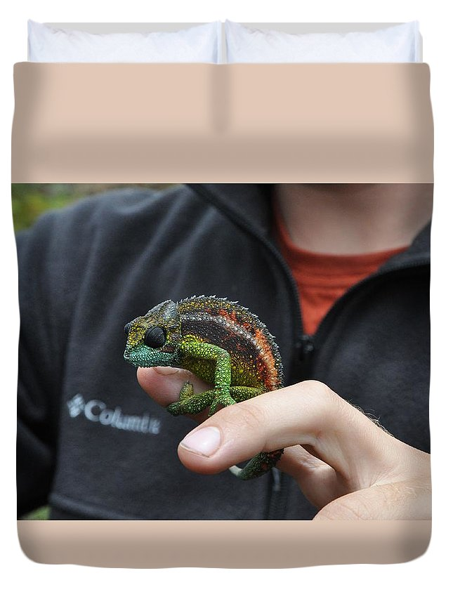 Chameleon Duvet Cover featuring the photograph Chameleon 1 by Rachel Young
