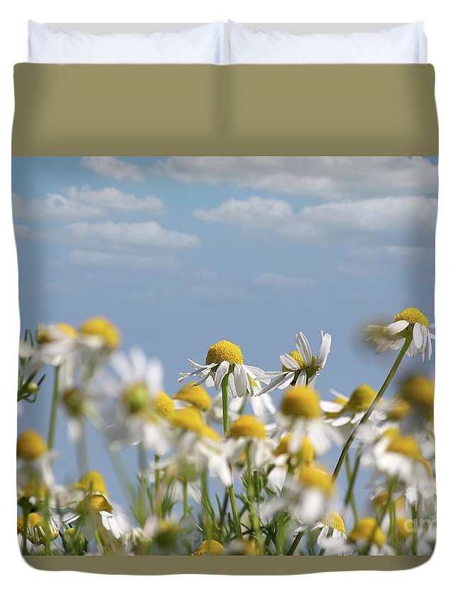 Camomile Duvet Cover featuring the photograph Chamomile Nature Spring Scene by Goce Risteski