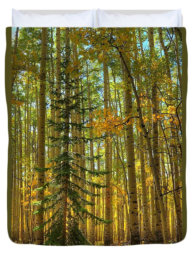Aspen Duvet Cover featuring the photograph Charlie Brown by David Ross