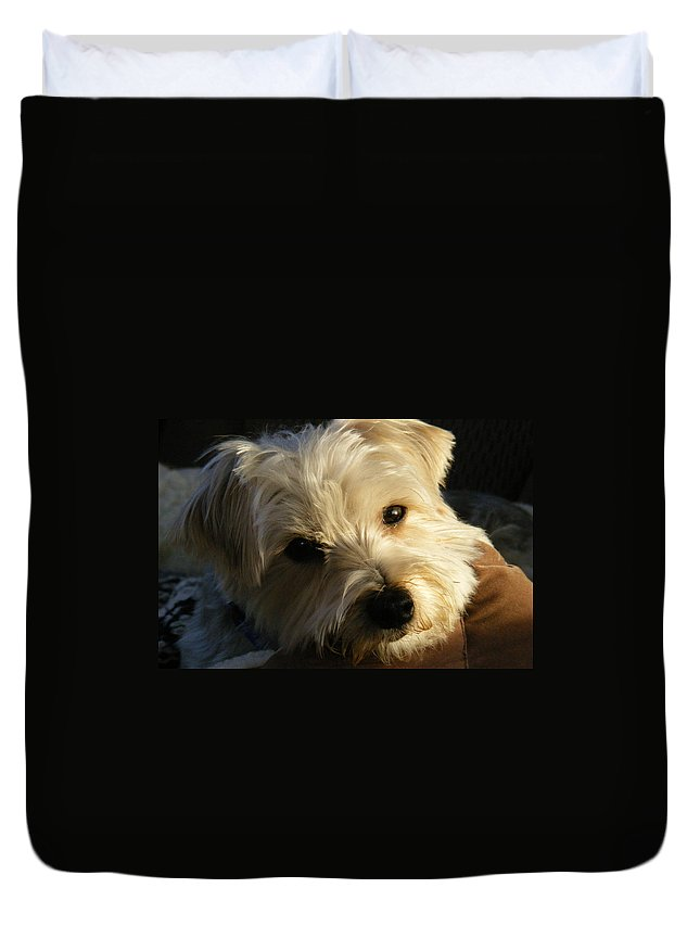 Dog Duvet Cover featuring the photograph Charlie by Ed Smith