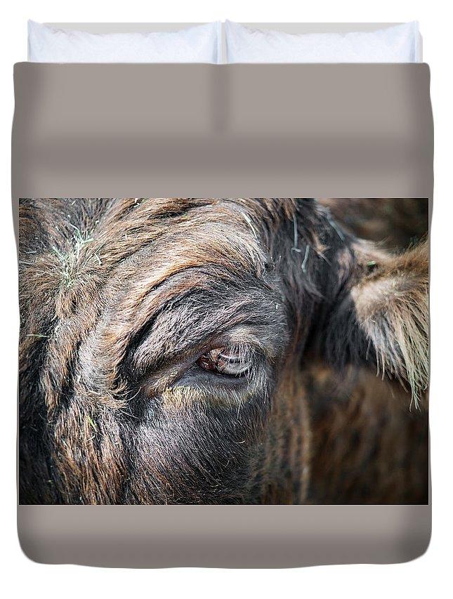 Cow Duvet Cover featuring the photograph Charming Eye by Joseph Shbair