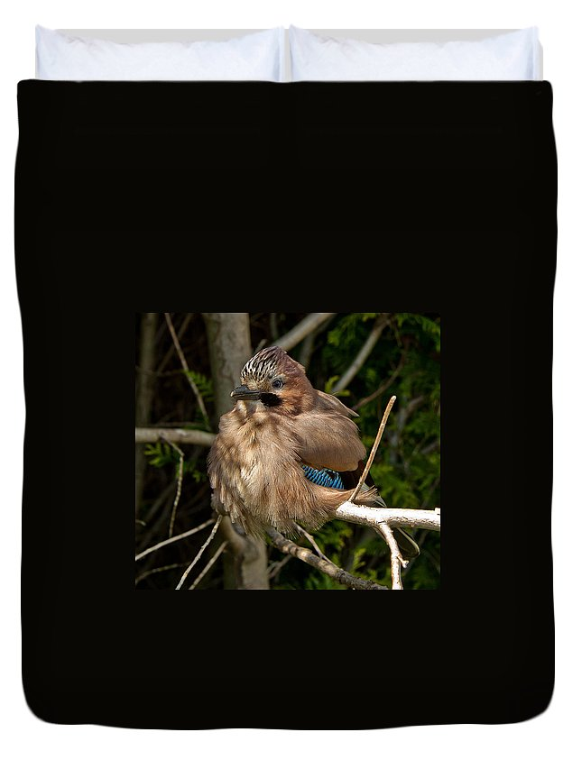 Nature Duvet Cover featuring the photograph Cheeky Jay by Dawn OConnor