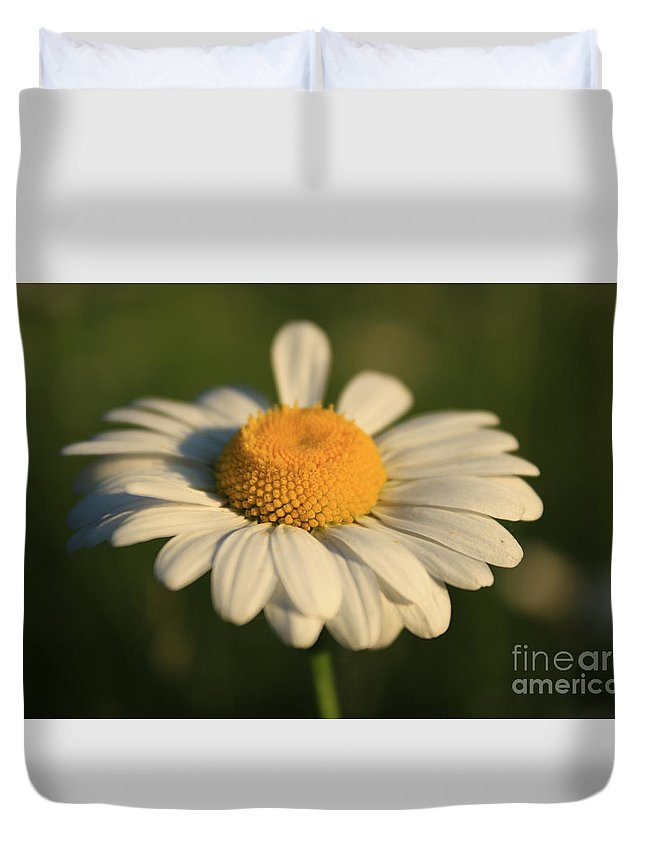 Daisy Flower Duvet Cover featuring the photograph Cheerful by Heather Newkirk