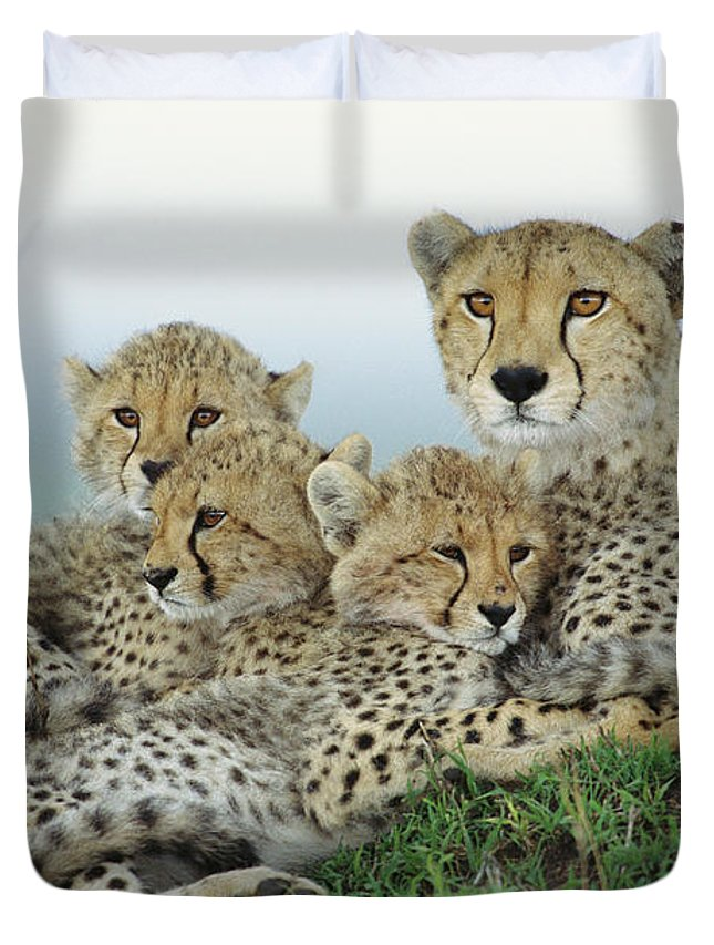 00345011 Duvet Cover featuring the photograph Cheetah And Her Cubs by Yva Momatiuk John Eastcott