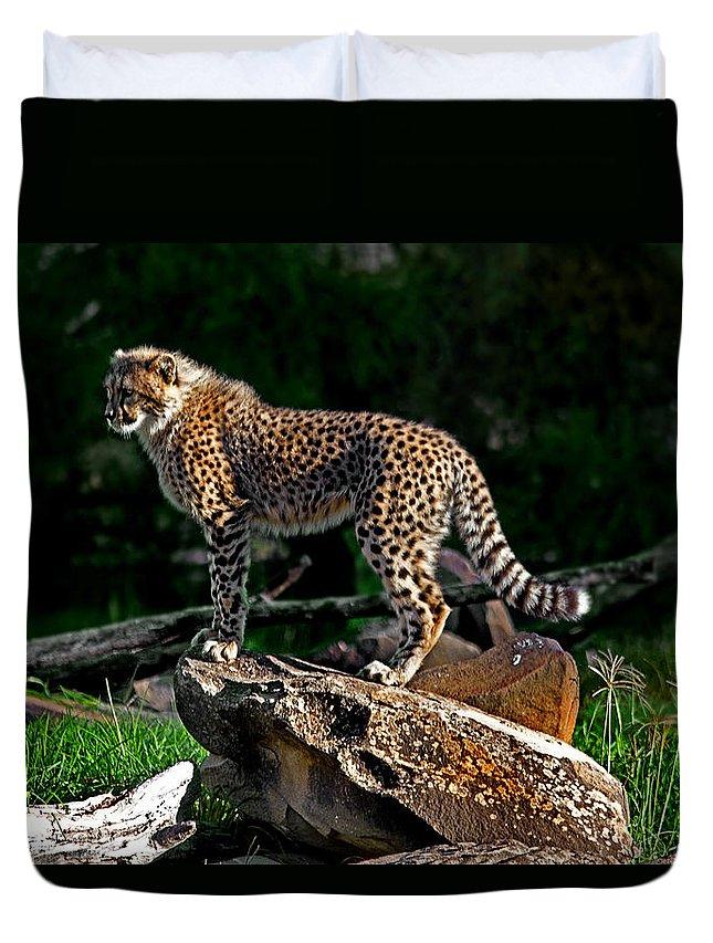 #cheetah Duvet Cover featuring the photograph Cheetah Cub Finds Her Pride Rock by Miroslava Jurcik
