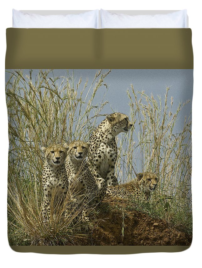 Africa Duvet Cover featuring the photograph Cheetah Family by Michele Burgess