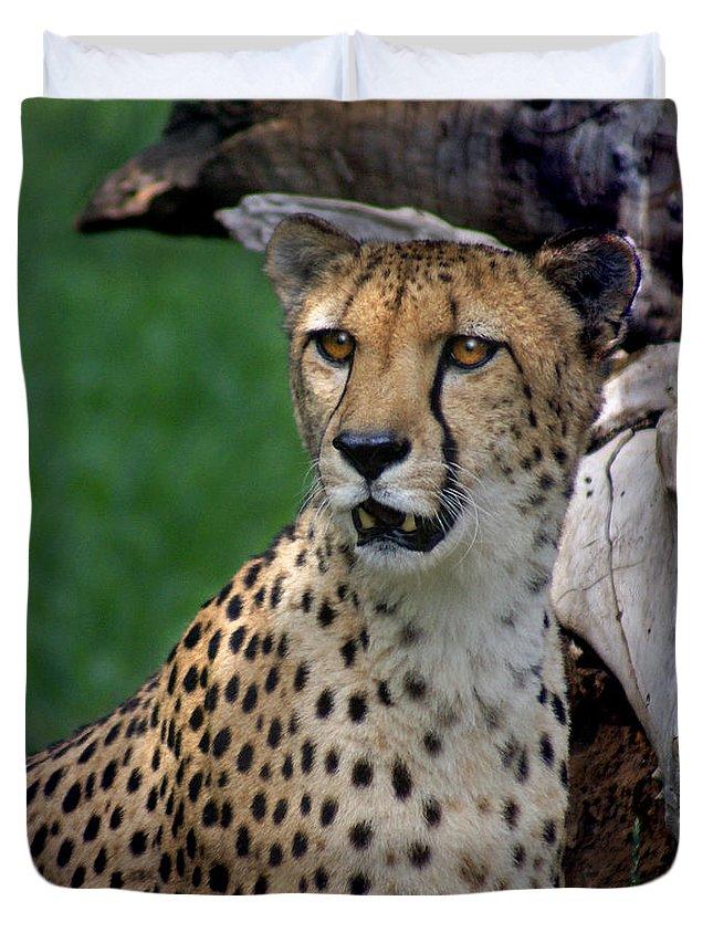 Cheeta Duvet Cover featuring the photograph Cheetah by Heather Coen