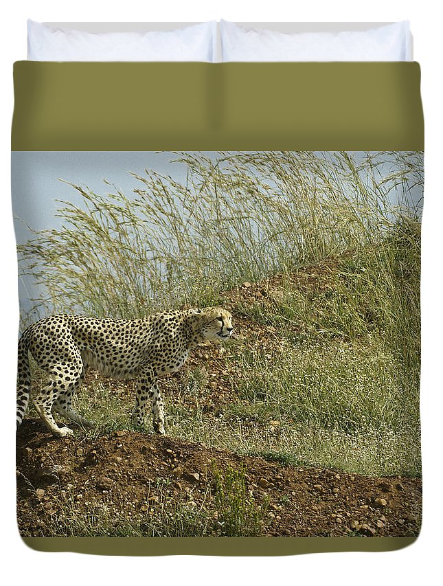 Africa Duvet Cover featuring the photograph Cheetah On The Prowl by Michele Burgess