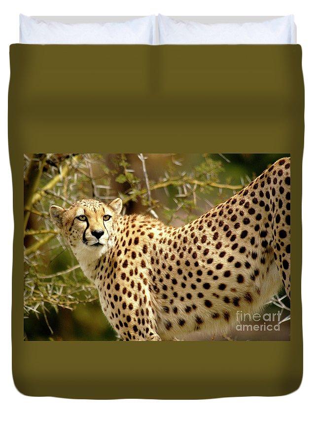 Cheetah Duvet Cover featuring the photograph Cheetah Portrait by Gunther Allen