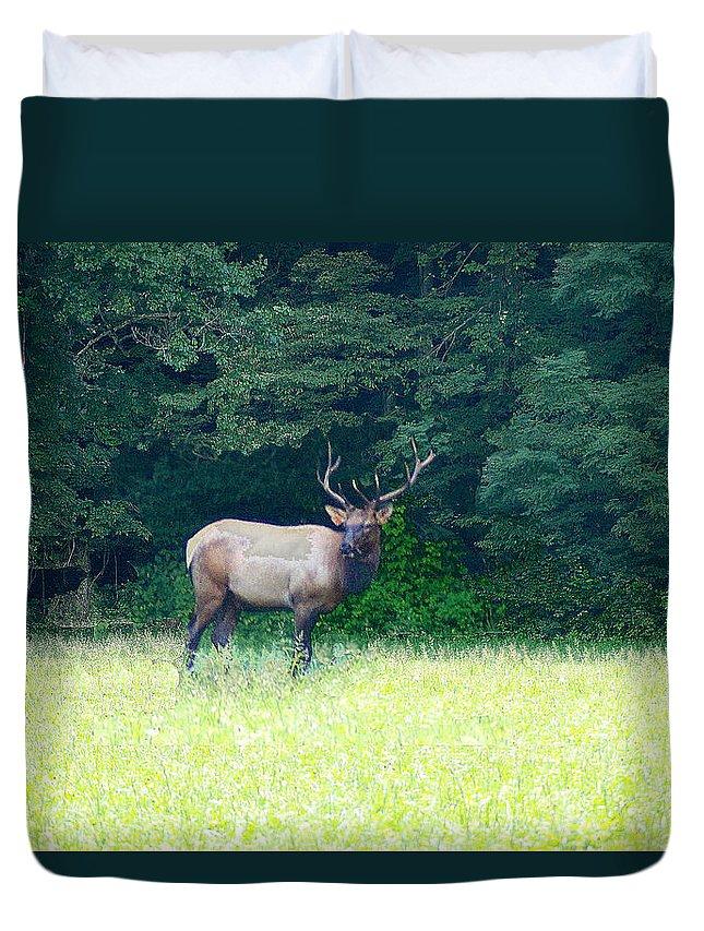 Cherokee Elk Duvet Cover featuring the photograph Cherokee Elk by Seth Weaver