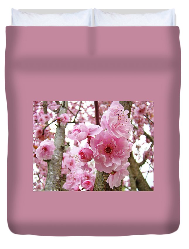 Nature Duvet Cover featuring the photograph Cherry Blossoms Art Prints 12 Cherry Tree Blossoms Artwork Nature Art Spring by Baslee Troutman