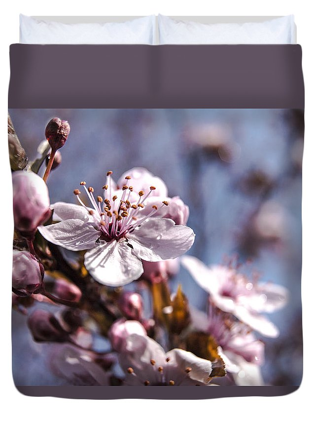Flowering Tree Duvet Cover featuring the photograph Cherry Blossoms by Denise Nehila