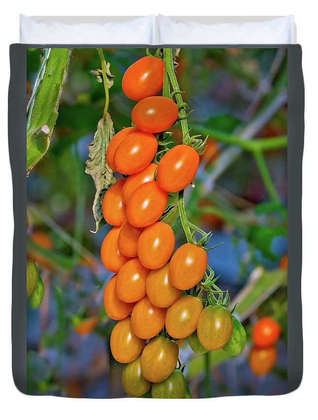 Tomatoes Duvet Cover featuring the photograph Cherry Tomatoes by Linda Unger