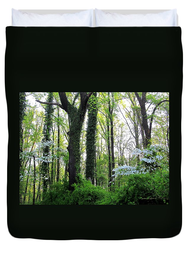 Oldgrowth Forest Landscapes Endangered Habitat Mature Forest Ecosystems Wetland Forest Rare Habitats Maryland Mature Forest Chesapeake Forest Nature Prints Rare Nature Biodiversity Conservation Maryland Flora Endangered Forest Biodiversity Duvet Cover featuring the photograph Chesapeake Oldgrowth Forest by Joshua Bales