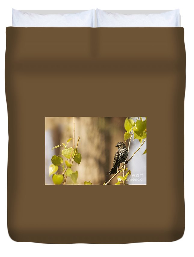 Warbler Duvet Cover featuring the photograph Chestnut-sided Warbler by Michael Shake