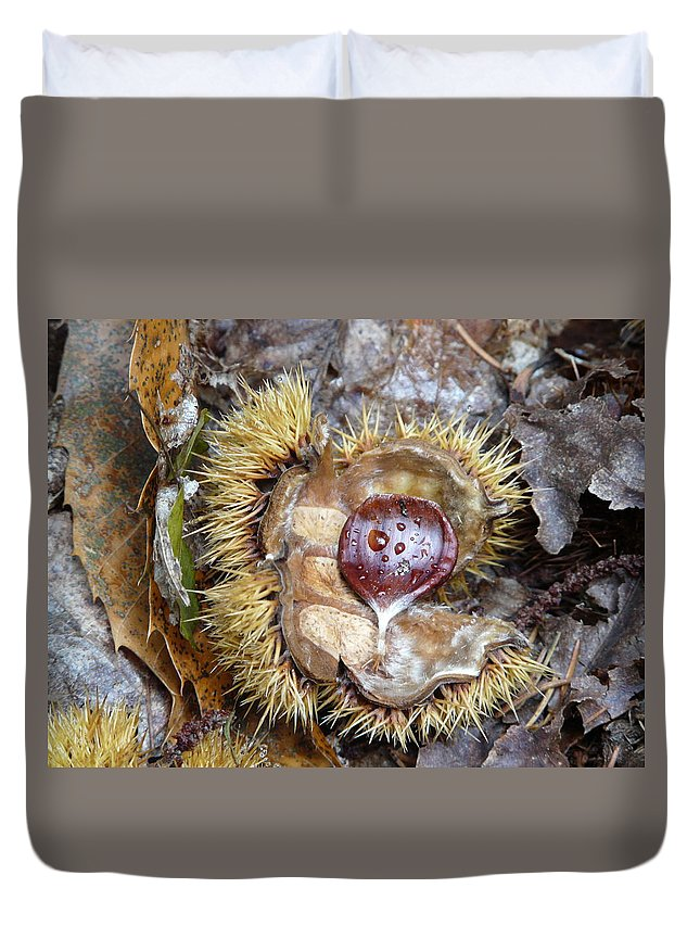 Chestnut Duvet Cover featuring the photograph Chestnut by Valerie Ornstein