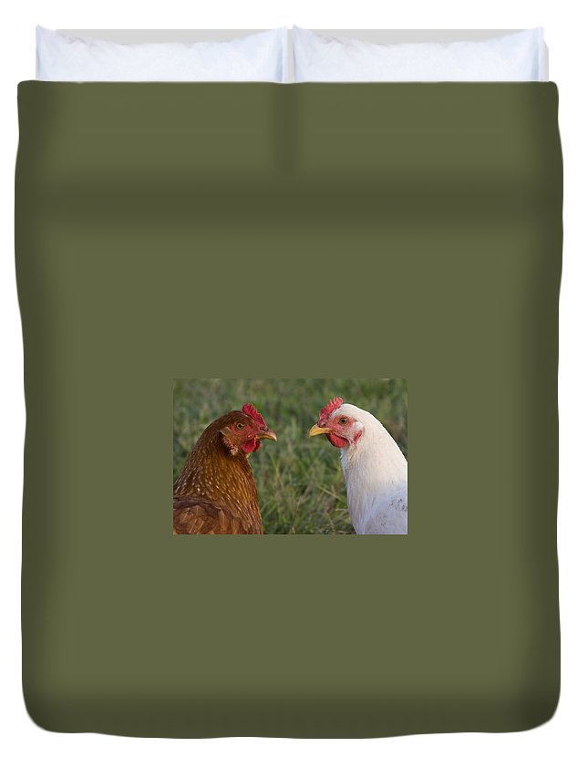 Chicken Hen Farm Rural Curious Bird Country Duvet Cover featuring the photograph Chickens by Andrei Shliakhau