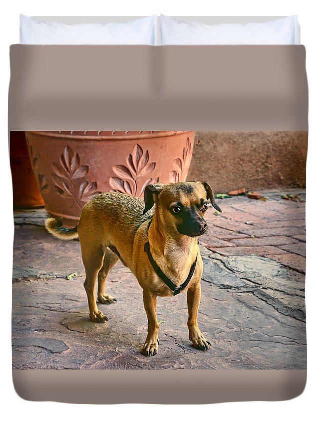 Chihuahua Duvet Cover featuring the photograph Chihuahua - Dogs by Nikolyn McDonald