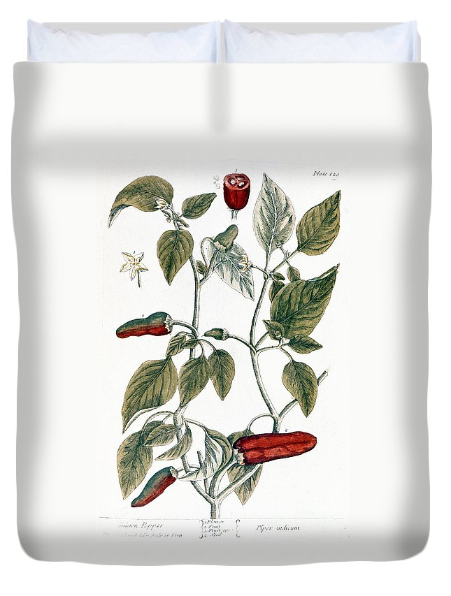 1730s Duvet Cover featuring the photograph Chili Pepper, 1735 by Granger