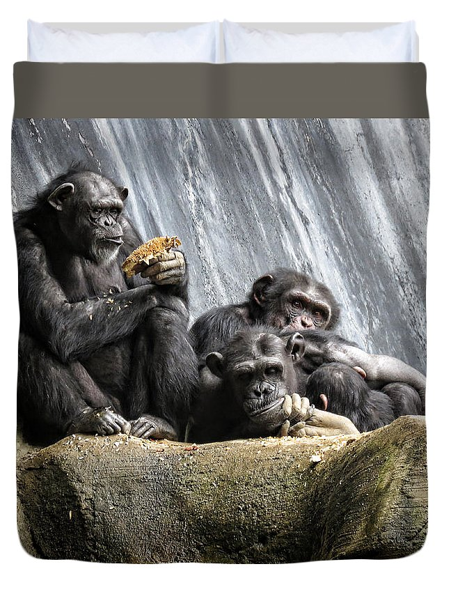 Chimpanzee Duvet Cover featuring the photograph Chimpanzee Snacking On A Sunflower by Helaine Cummins