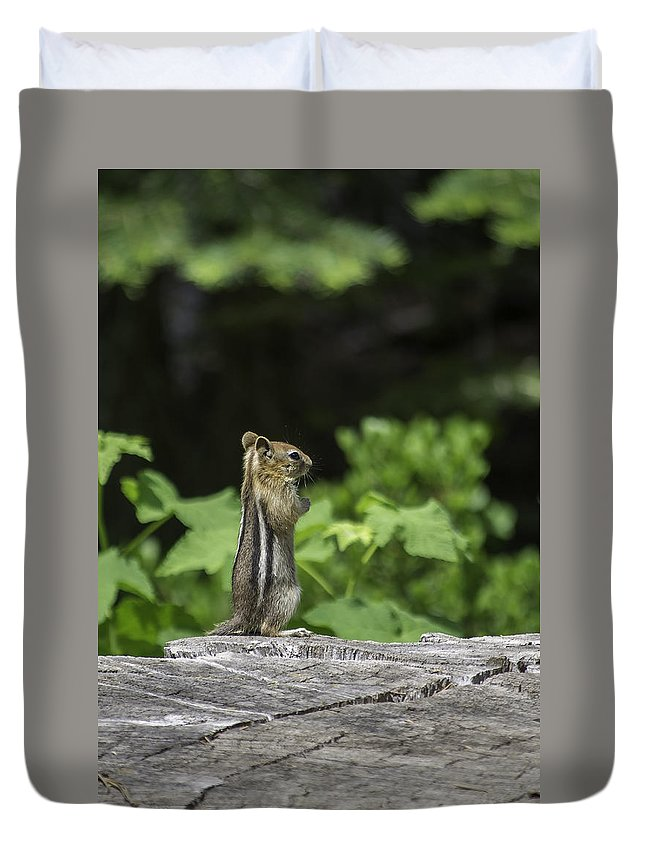 Chipmunk Duvet Cover featuring the photograph Chipmunk In South Lake Tahoe by Diego Re