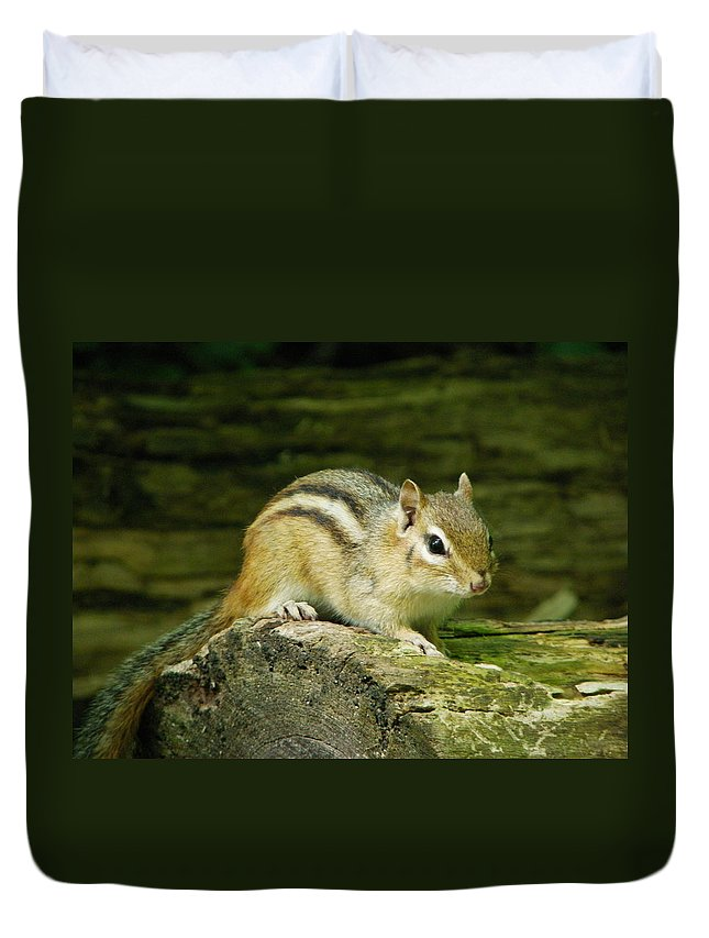Nature Duvet Cover featuring the photograph Chipmunk by Peggy King
