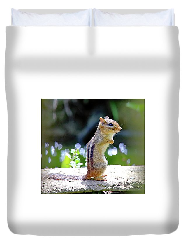 Chipmunk Duvet Cover featuring the photograph Chipmunk by PJQandFriends Photography