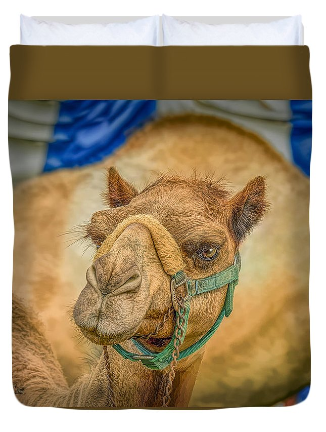 Not Wednesday Camel Duvet Cover featuring the photograph Christmas Camel On Call by LeeAnn McLaneGoetz McLaneGoetzStudioLLCcom