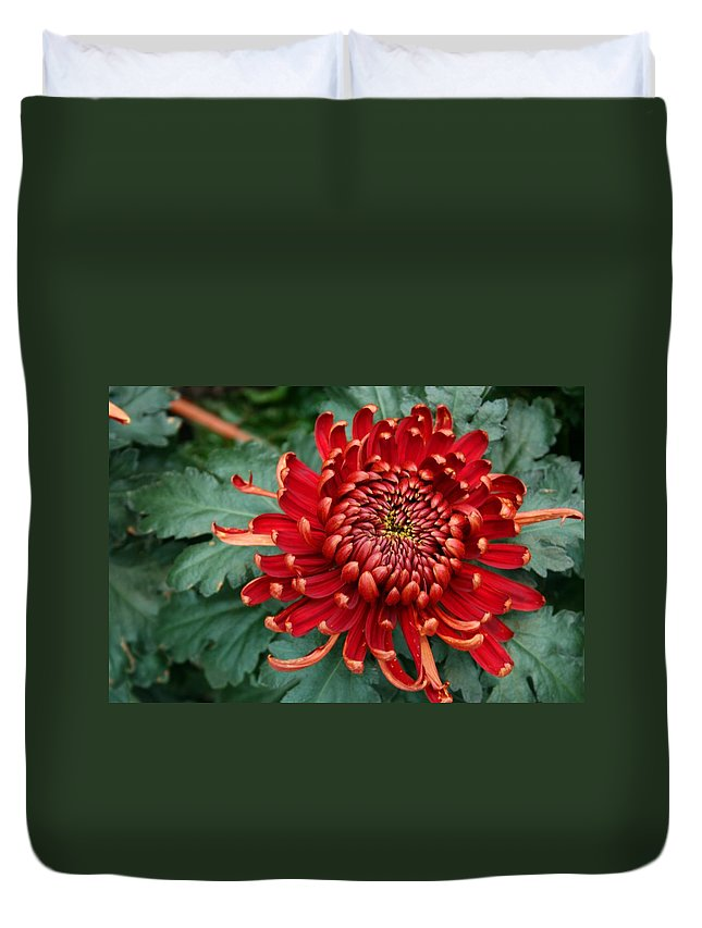 Plants Duvet Cover featuring the photograph Christmas Chrysanthemum by Angie Schutt